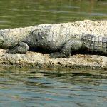 Chambal wildlife sanctuary