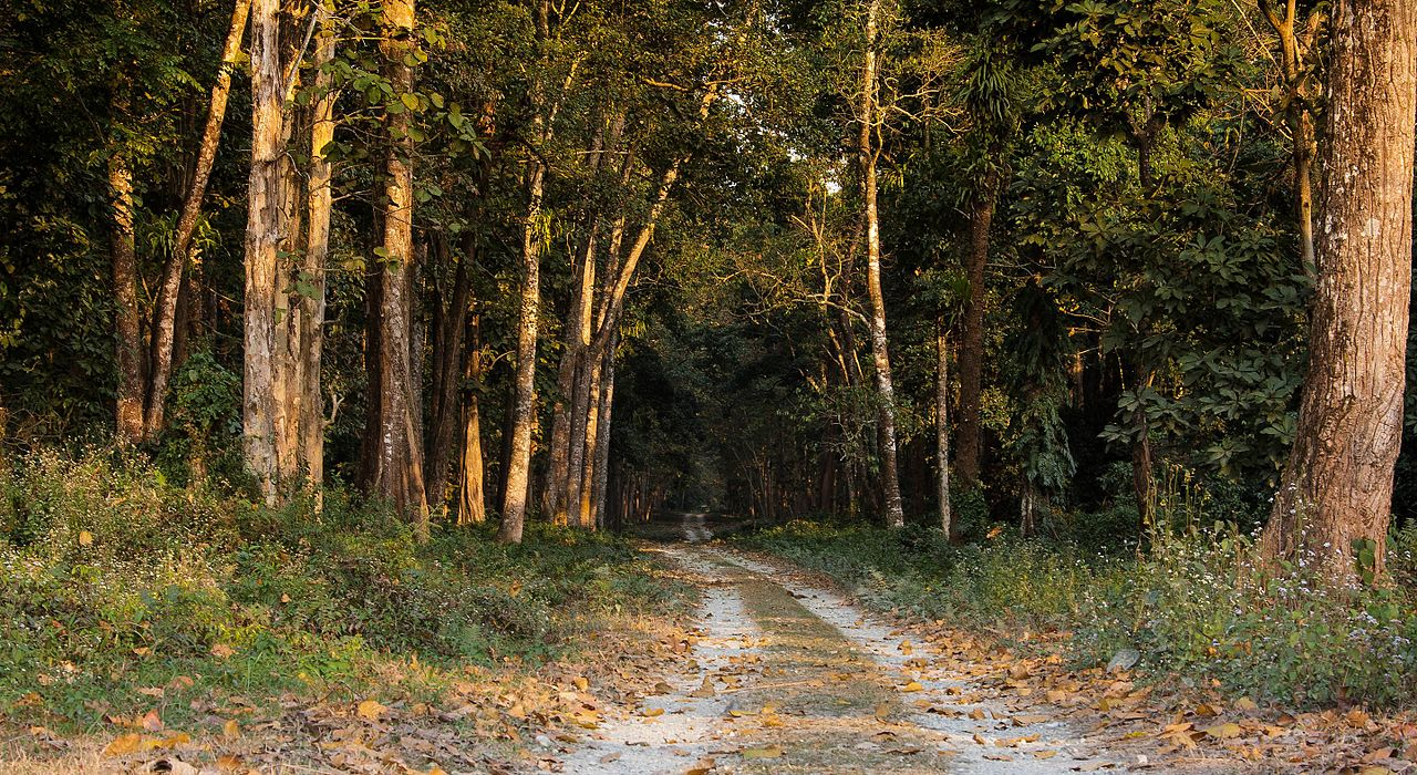 Place To See Near Jaldapara National Park-Chilapata Forest