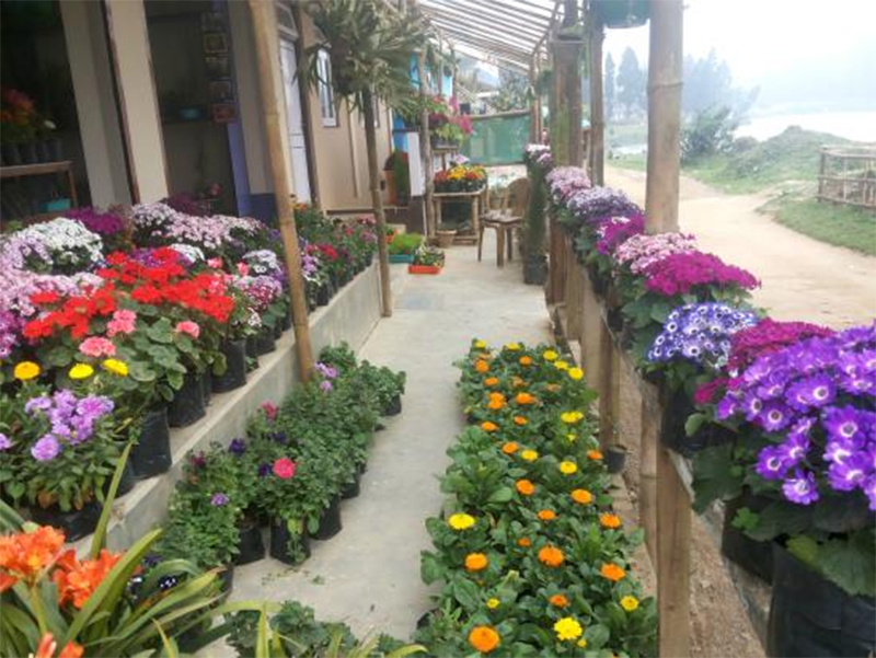 Chogyal Floriculture Nursery - Place to Shop in Mirik