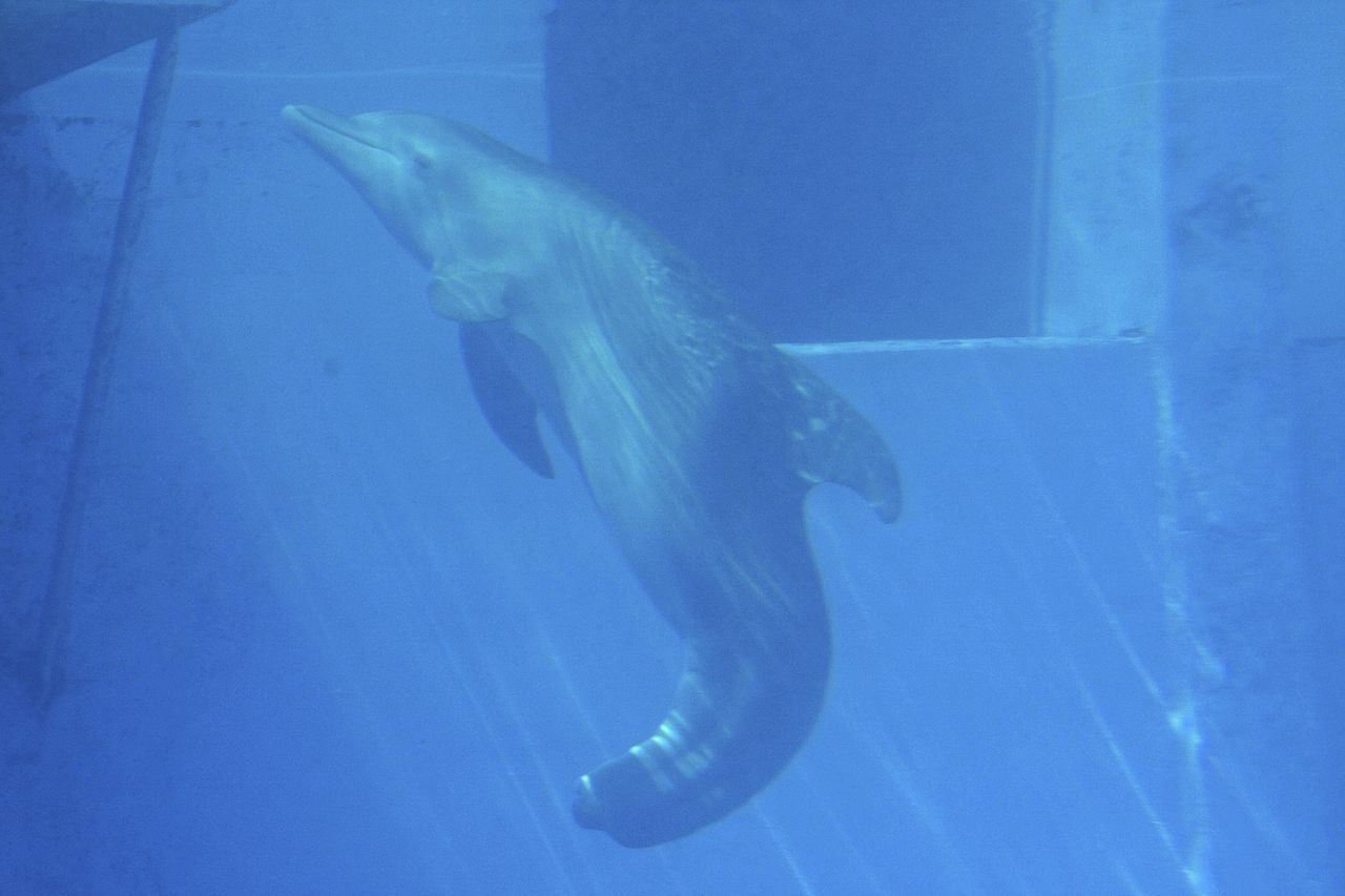 Attraction Place to Visit in St. Petersburg-Clearwater Marine Aquarium