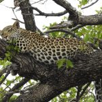 Clouded Leopard National Park - Amazing National Park in Tripura