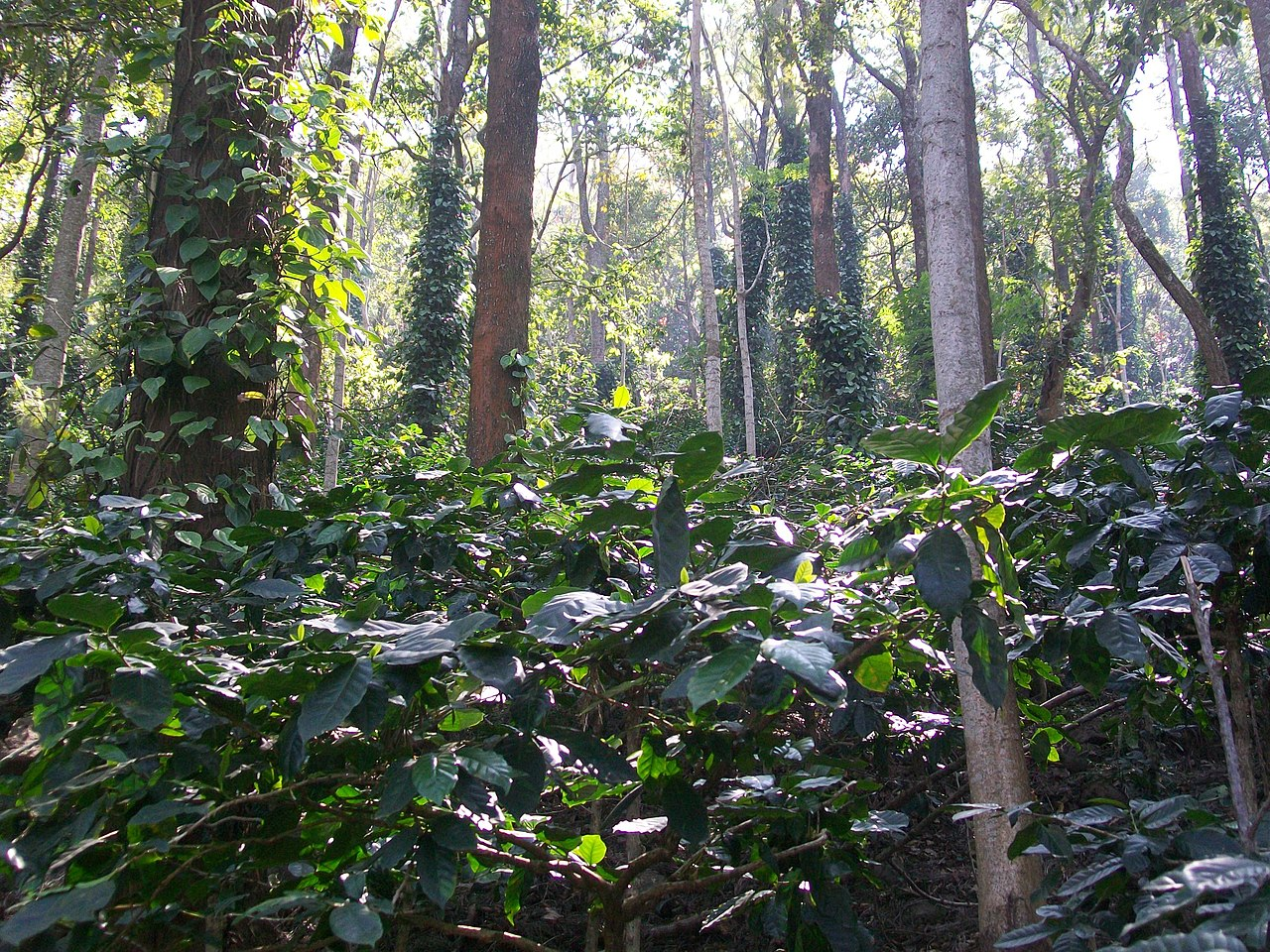 Things To Do At Araku Valley-Explore the Coffee Plantations