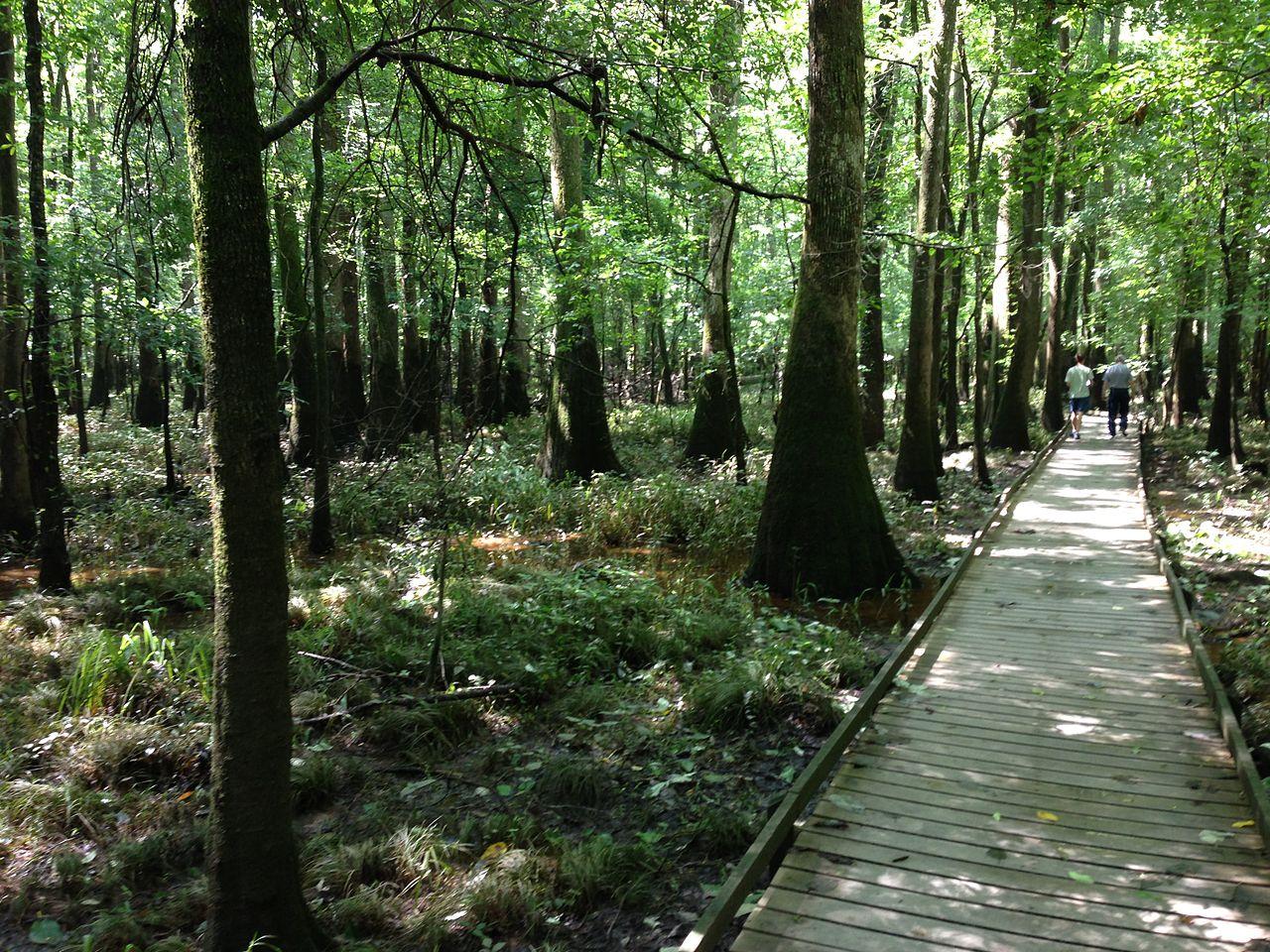 Must Visit Place Visit In South Carolina-Congaree National Park