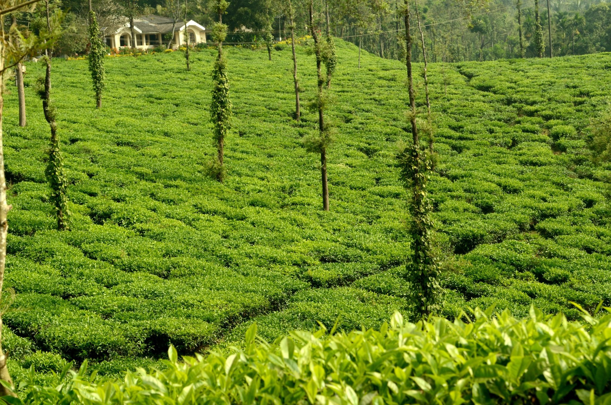 Coorg - Weekend Getaways Within 350 km of Wayanad