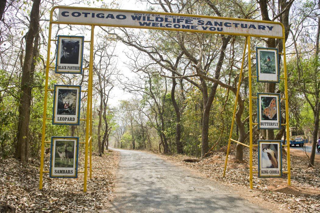 Best National Park to Visit in Goa-Cotigao Wildlife Sanctuary