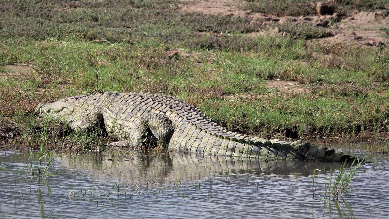 Amazing Place To See Near Jaldapara National Park-Crocodile Zoo