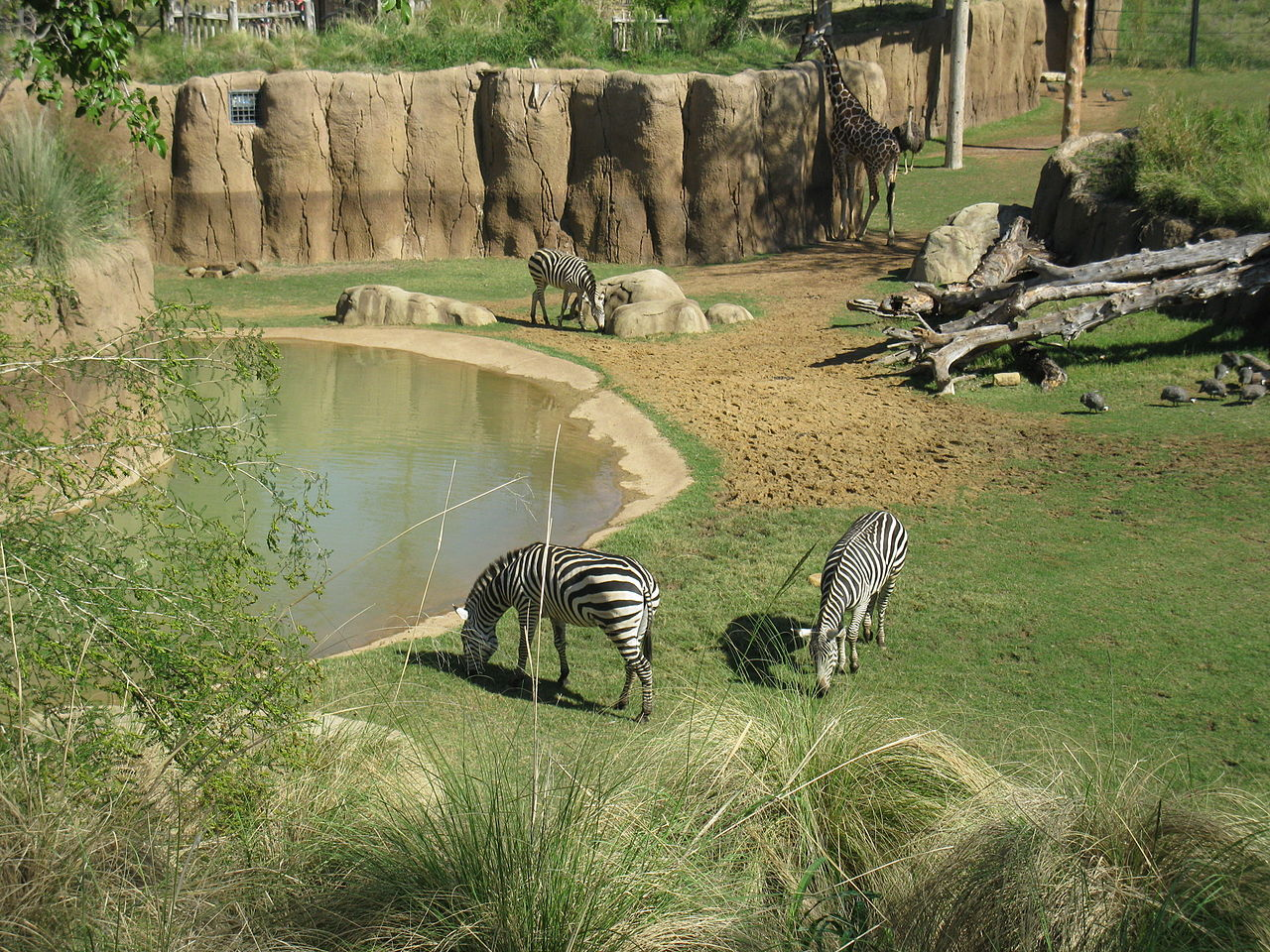 Dallas Zoo - Amazing Place To Explore In Dallas
