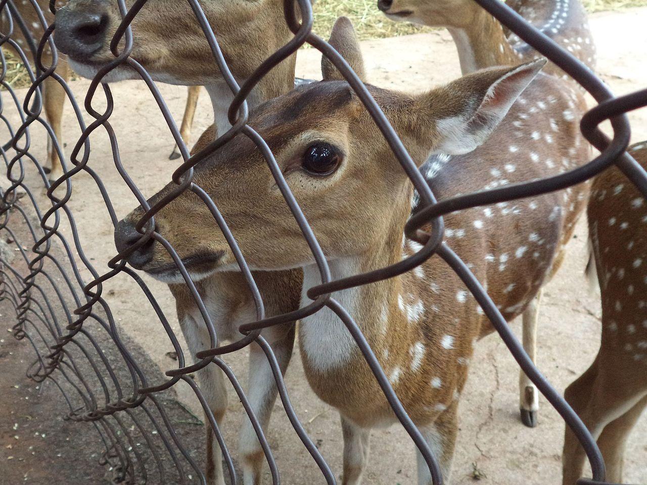 Deer Park, Tirupati-Amazing Destination to Visit In Tirupati