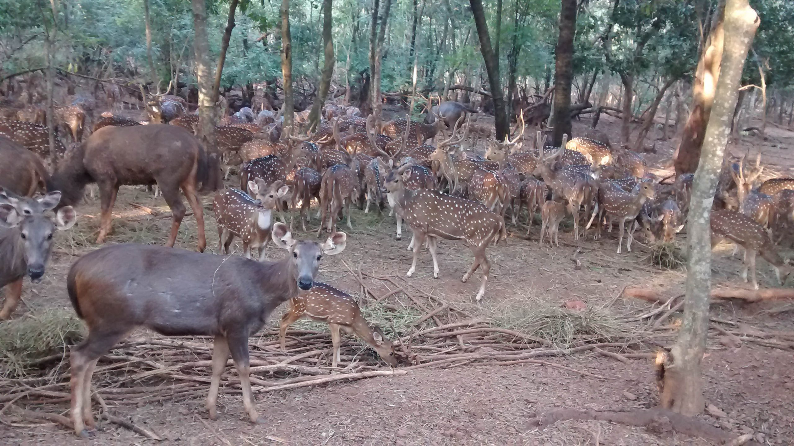 Amazing Place To Visit In Cuttack-Deer Park