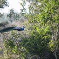 Dibrugarh Tourism - Dehing Patkai Wildlife Sanctuary place to visit in Dibrugarh