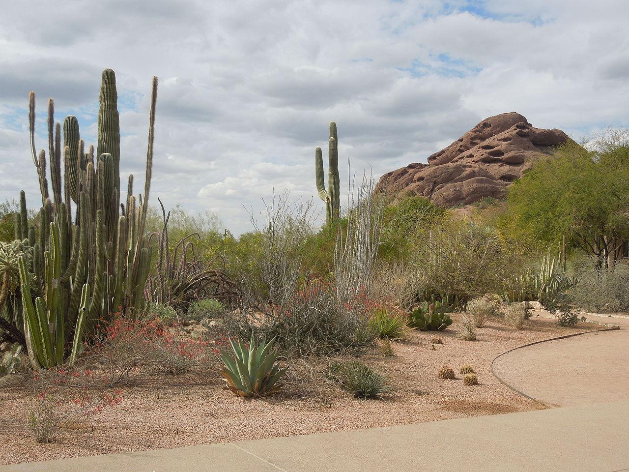 Best Place To Visit In Phoenix-Desert Botanical Garden