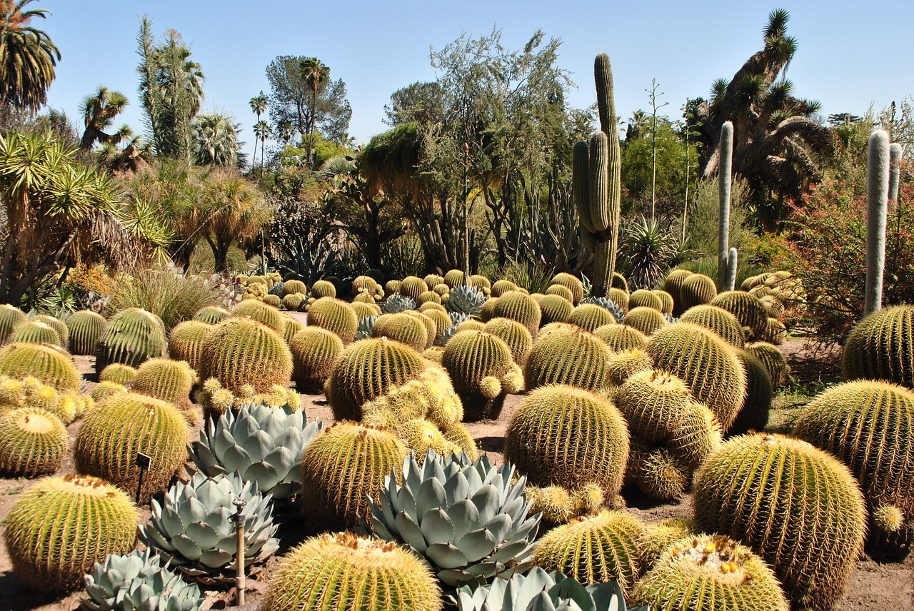 Amazing Weekend Getaways From Scottsdale-Desert Botanical Garden