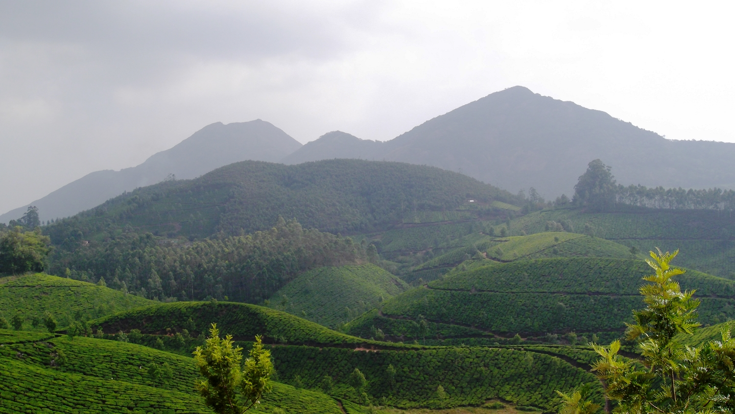 Devikulam Must-Visit Hill Station Within 500 Kms of Wayanad