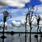 dibru saikhowa national park