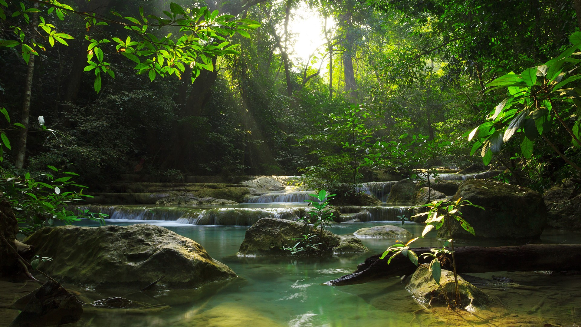 Discover The Evergreen Forest At Erawan National Park in Thailand