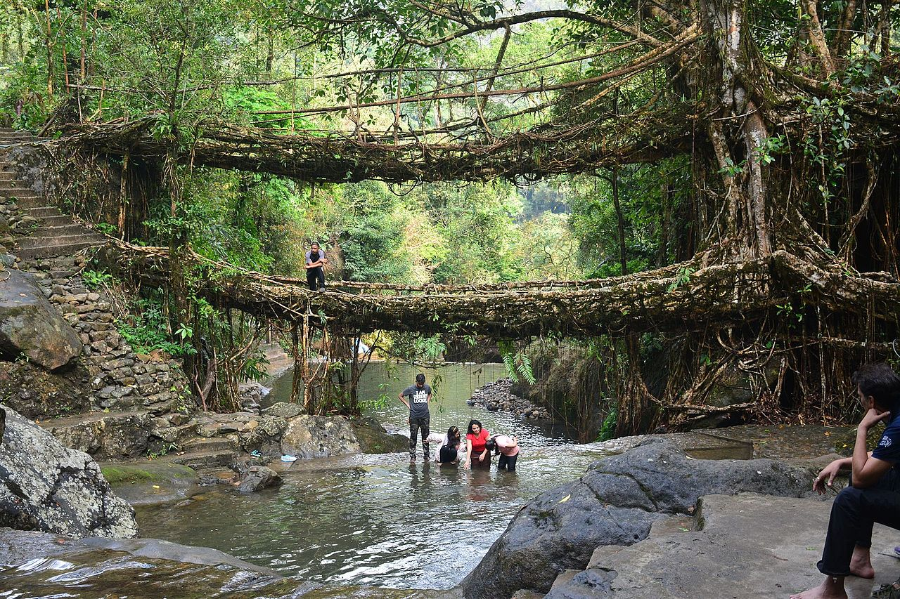 Top Attraction to Nearby Nohkalikai Waterfalls-Double Decker Living Root Bridges
