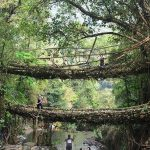 Double Decker Living Root Bridges - Amazing Place To Visit In Cherrapunji
