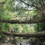 Double Decker Living Root Bridges - Amazing Place To Visit In Cherrapunji