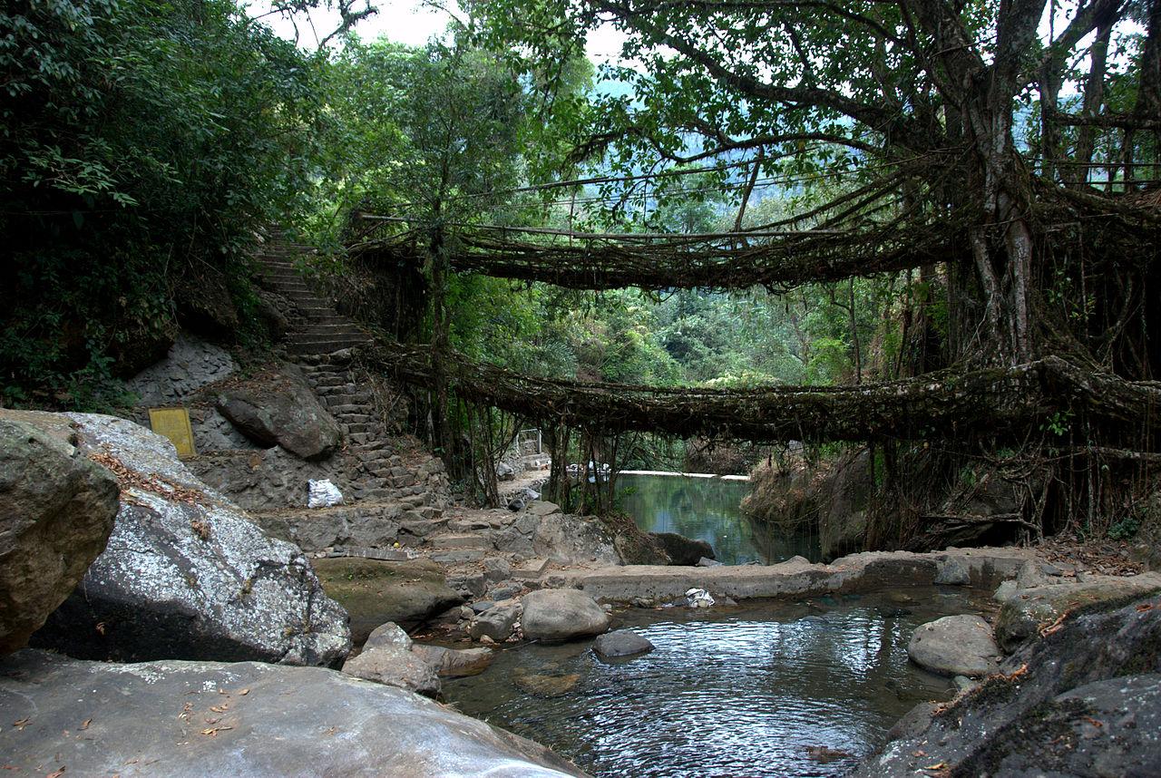 Famous Place To Visit Near Thangkharang Park-Double Decker Living Root Bridges