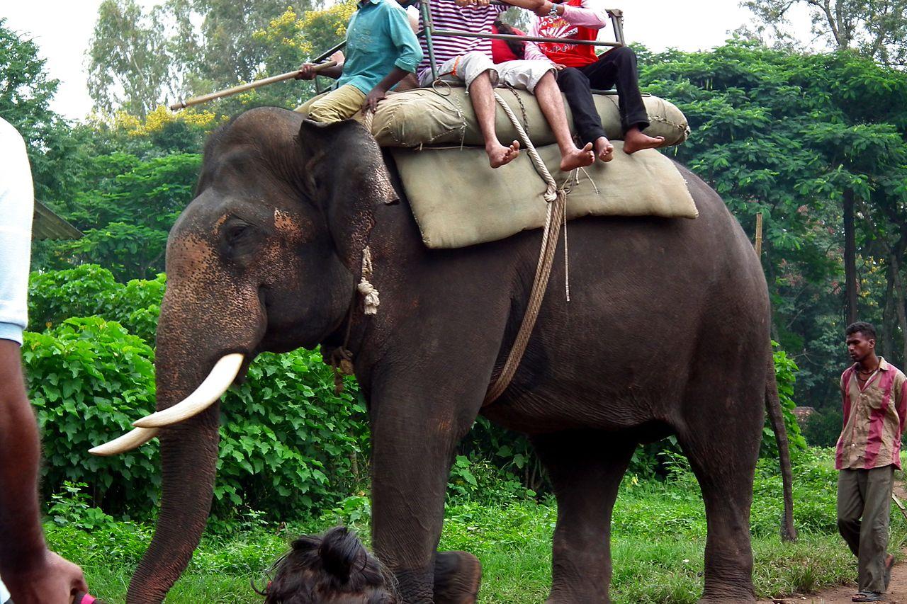 Dubare Elephant Camp - Bylakuppe The Beautiful Indian Tibet Near Coorg in Karnataka