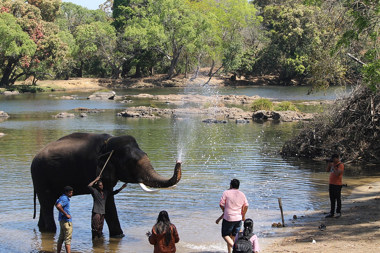 Sightseeing Attraction in Coorg-Dubare Elephant Camp