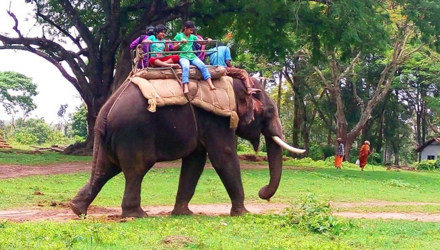 Dubare Elephant Camp - Main Attractions Of Coorg Scotland of India