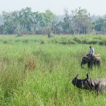 Visit Dudhwa National Park in Uttar Pradesh