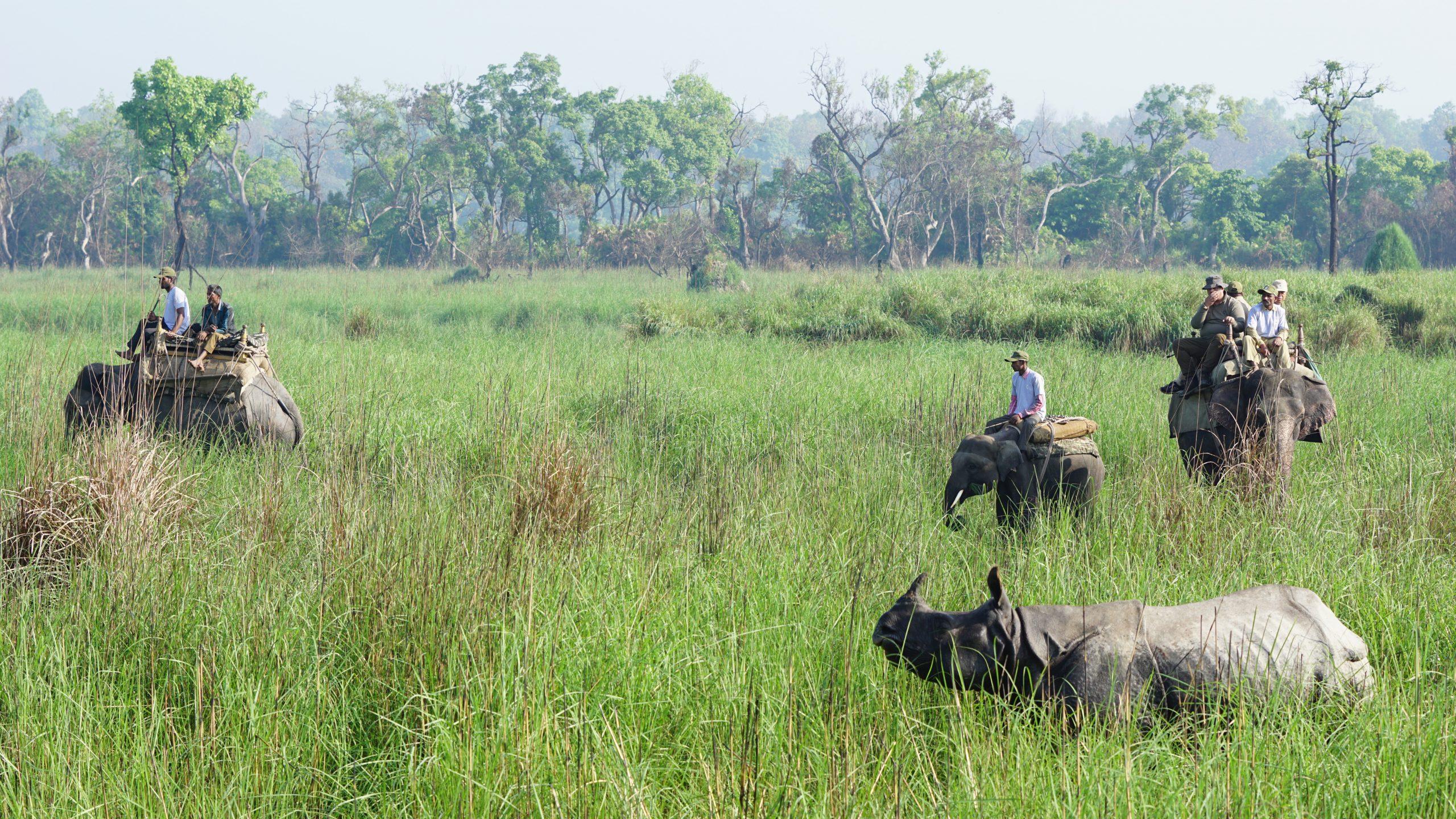 Visit Dudhwa National Park in Uttar Pradesh