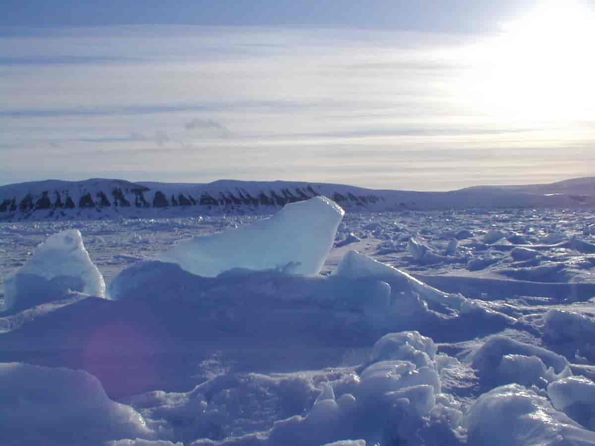 Must-Visit Attraction of Islands of Norway-Edgeøya