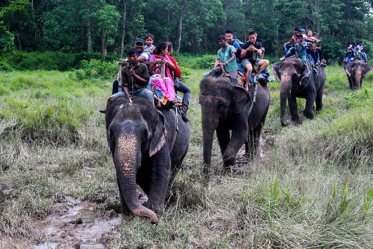 Things To Do At The Manas National Park-Elephant Safari