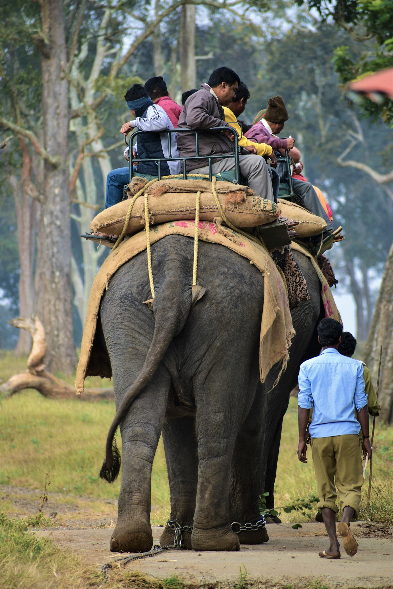 Best Activities To Do In This National Park-Elephant Safari