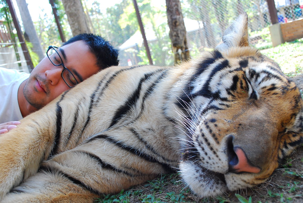 Experience Wildlife At Tiger Kingdom - Phuket Best Places To Visit