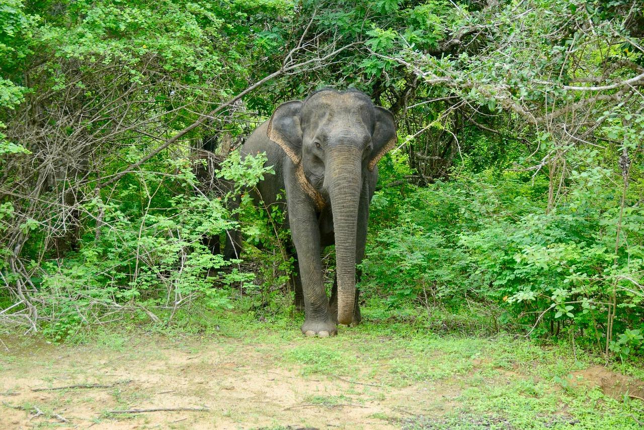 List Of Top National Park In Assam-Manas National Park
