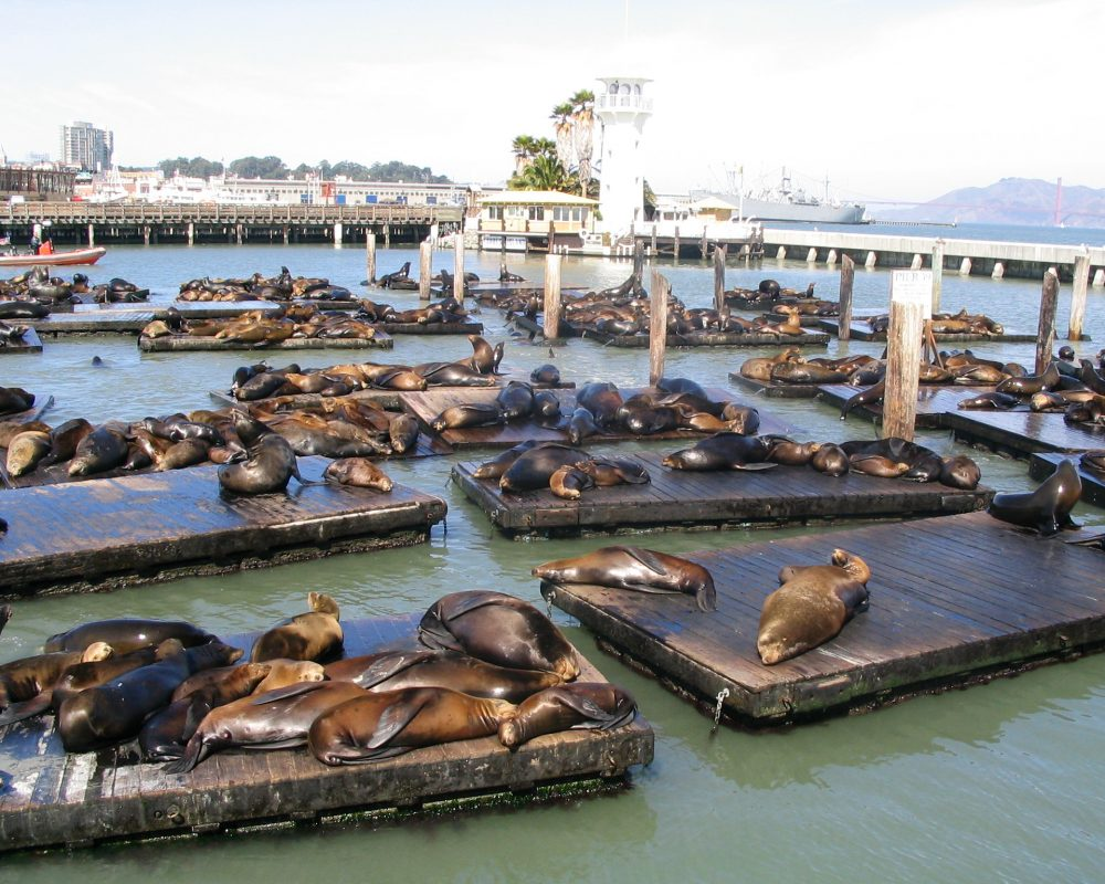 Fisherman's Wharf in San Francisco - Visit SF