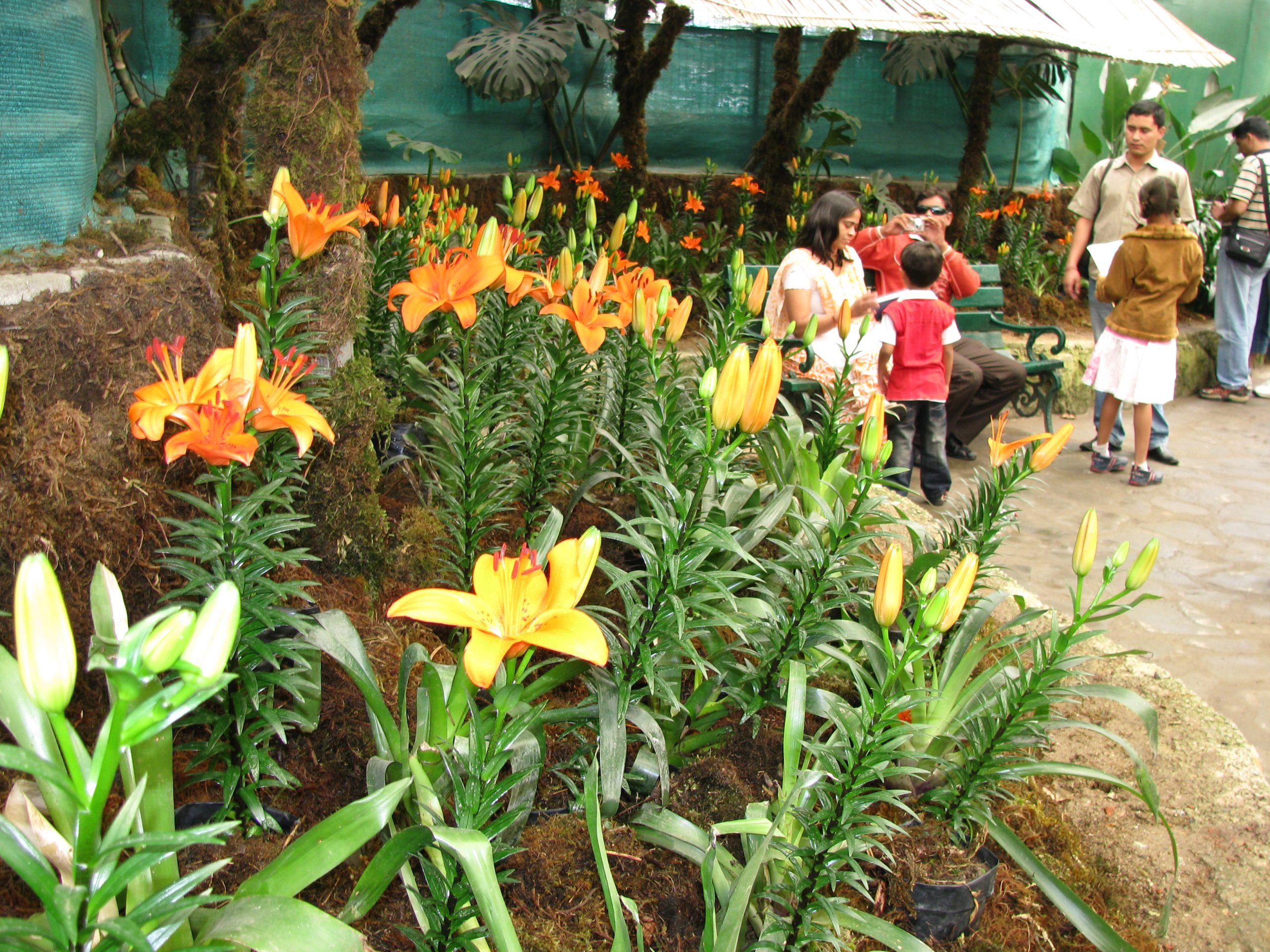 Flower Exhibition Center Things To Do And See In The Capital Of Sikkim