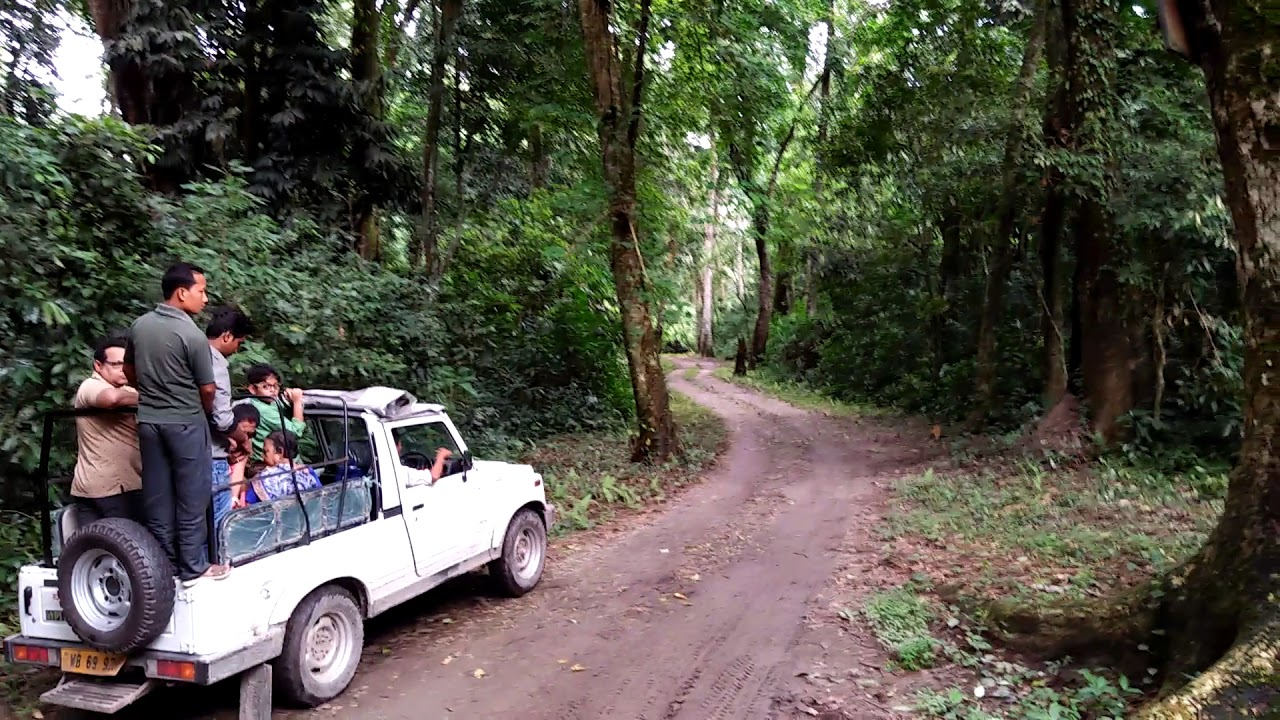 Go on a Jungle Safari in Chilapata Forest - Siliguri Travel Guide : Top Things To Do in Siliguri