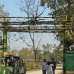 Gorumara National Park - Place in Lataguri That Every Wanderlust Travelers Will Love