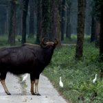 Visit Gorumara National Park: Famous For The One Horned Rhino