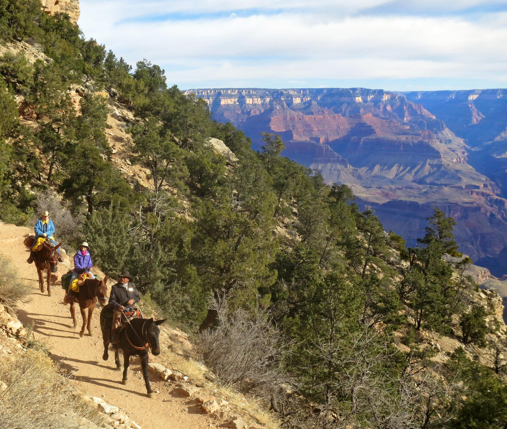 Amazing Sightseeing Destination in Arizona-Grand Canyon Track Rides