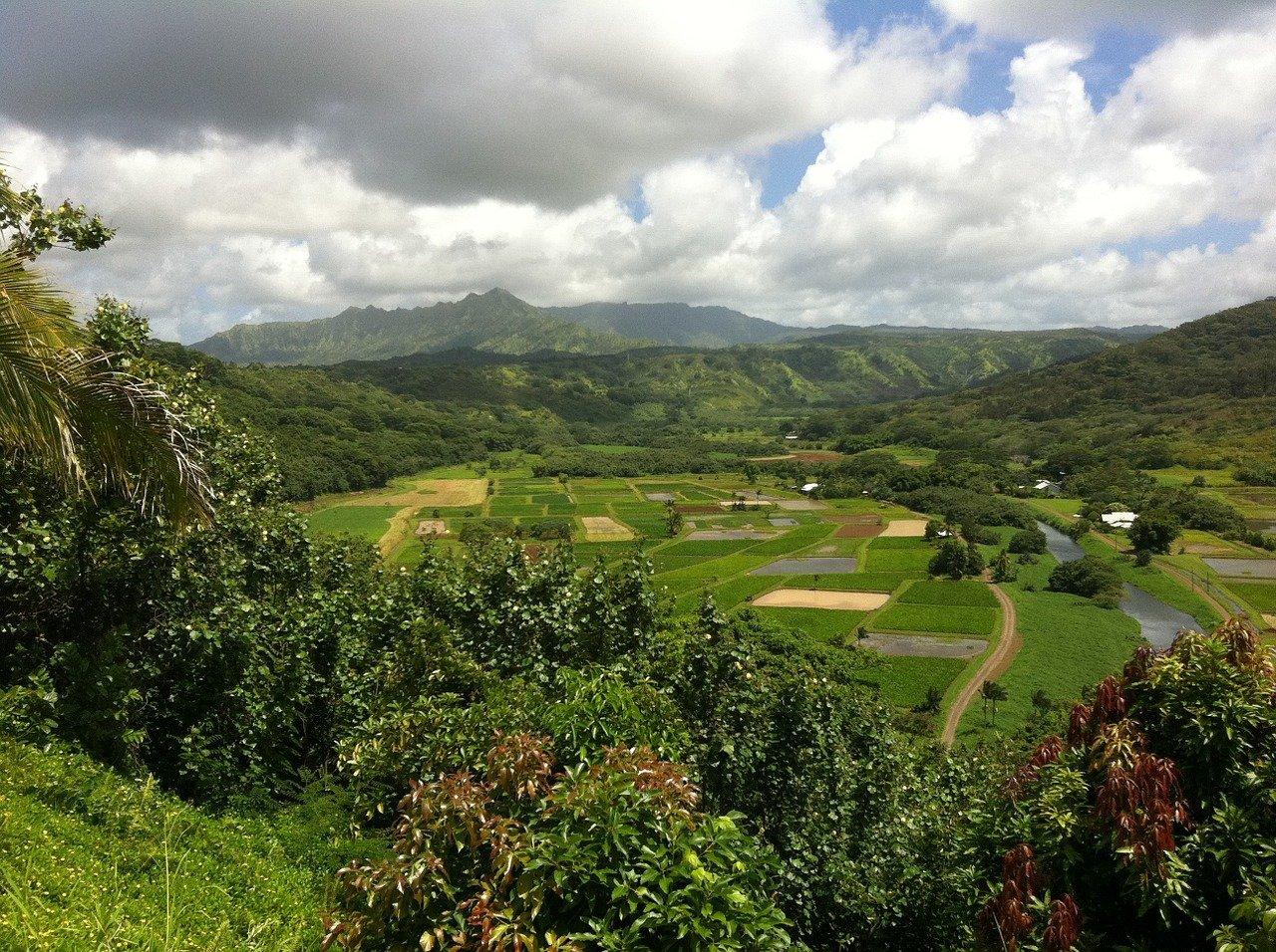 Greenwell Farms - Best Coffee Farm in Hawaii