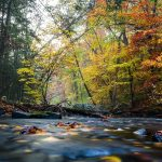Hacklebarney State Park - New Jersey State Park You Cannot Miss Visiting
