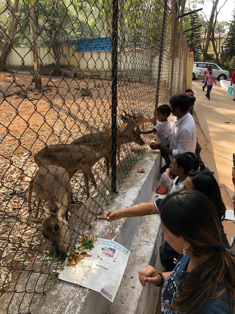Best Tourist Spot to Visit Around Horsley Hills-Horsley Hills Zoo