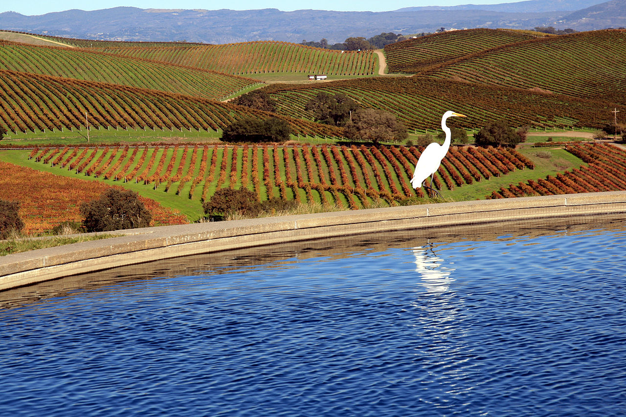 How To Plan A Visit To Napa Valley? - Napa Valley Tour Guide