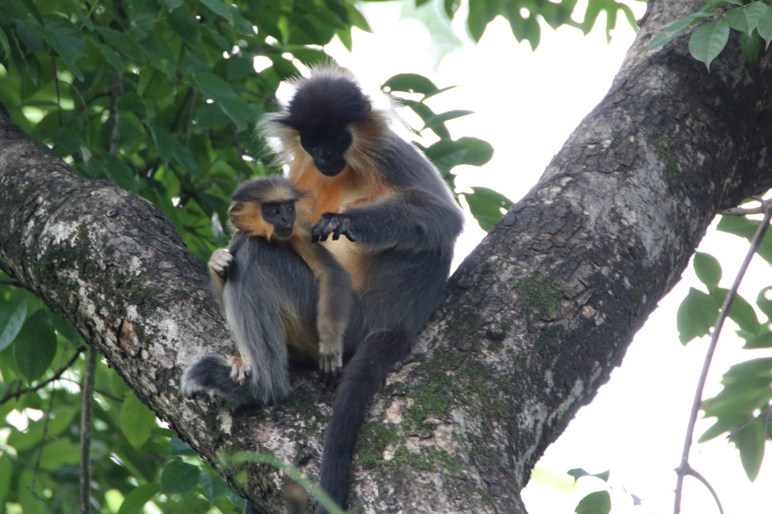 Itanagar Wildlife Sanctuary- Amazing Wildlife Sanctuaries in Arunachal Pradesh