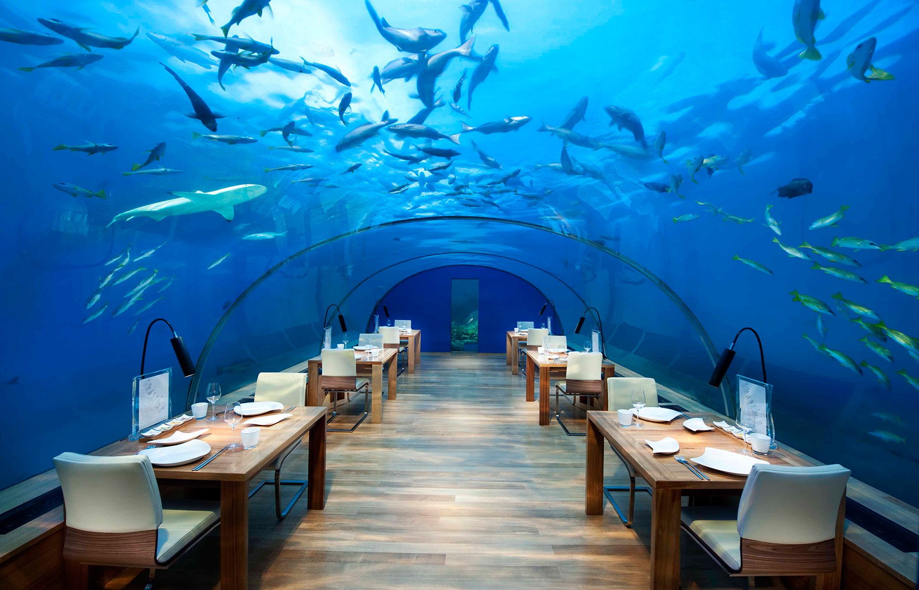 Ithaa Undersea Restaurant - Best Place To Eat In Maldives