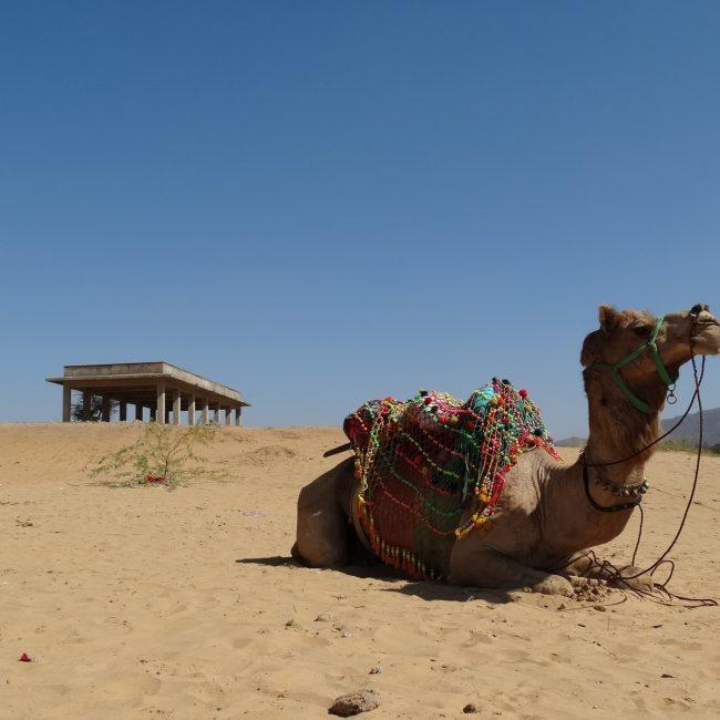 Jaisalmer Desert - Top-Rated Desert Destination in Rajasthan