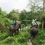 Jaldapara National Park - Top Madarihat Sightseeing Place for Your Upcoming Trip