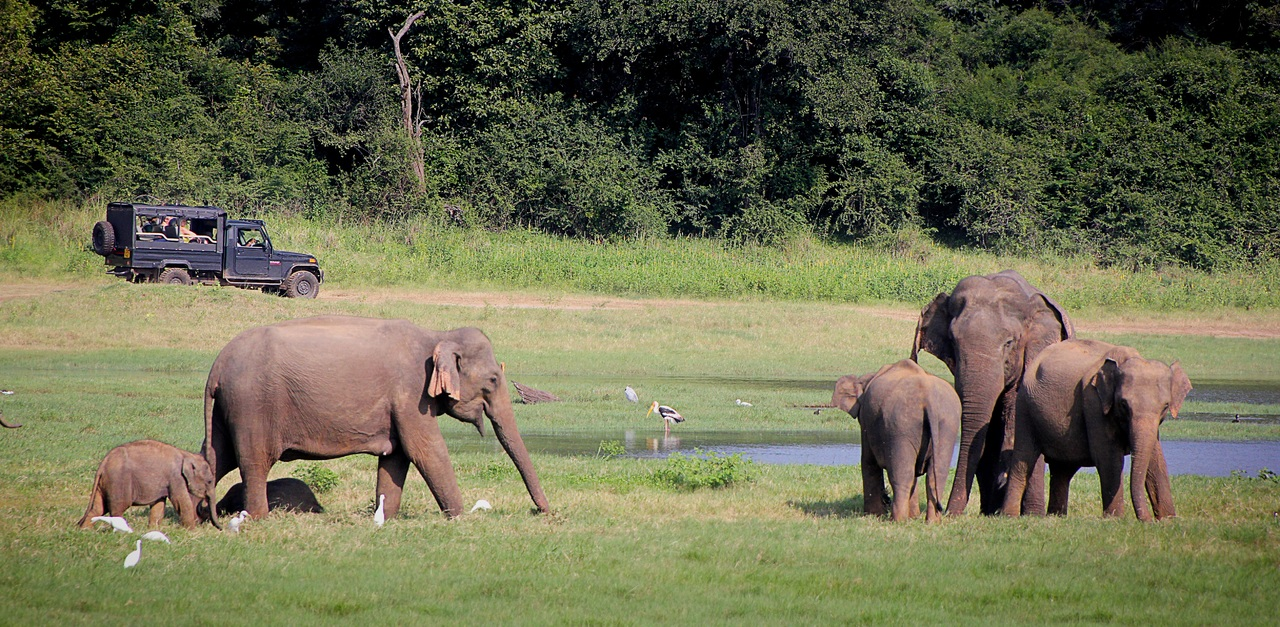 Popular Things To Do At The Manas National Park-Jeep Safari