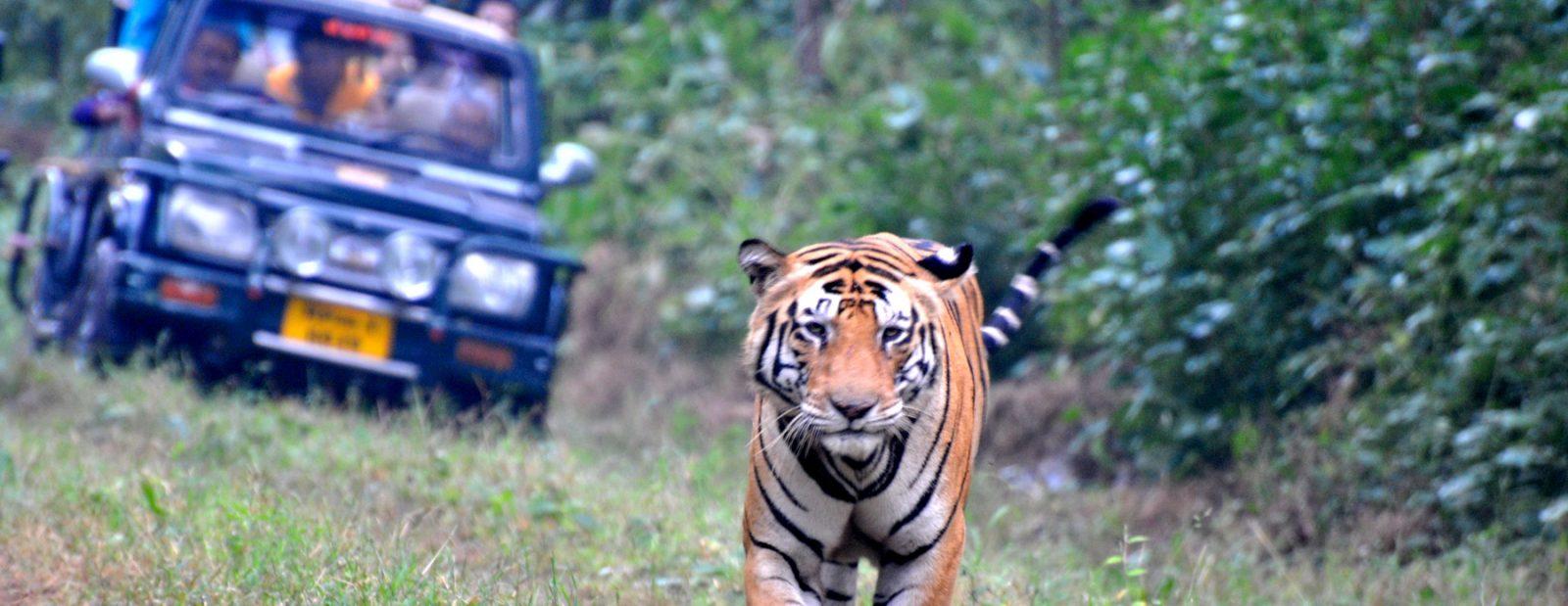 Jeep Safari at Katarniaghat Wildlife Sanctuary