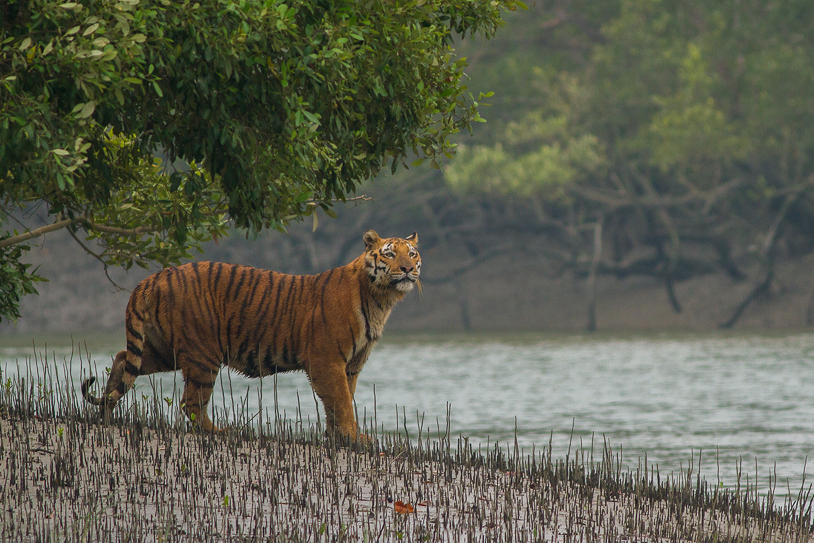 Sundarban Tiger Camp - Sundarban Tiger Camp & Top Places to Visit in Sunderbans